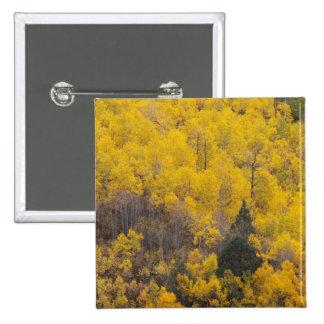 Provo River and aspen trees 12 Button