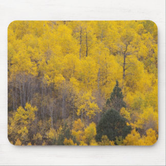 Provo River and aspen trees 12 Mousepad