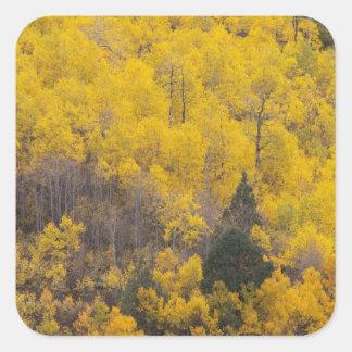 Provo River and aspen trees 12 Square Sticker