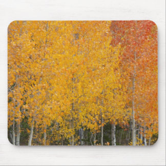 Provo River and aspen trees 13 Mouse Pads