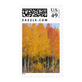Provo River and aspen trees 13 Postage Stamp