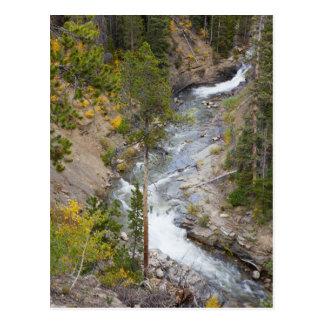 Provo River and aspen trees 14 Postcard
