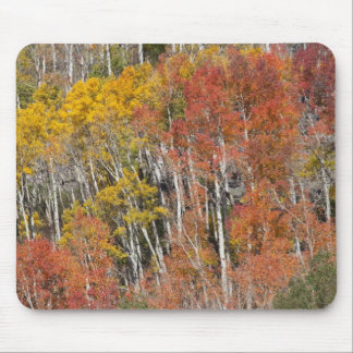 Provo River and aspen trees 15 Mousepads
