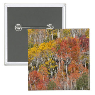 Provo River and aspen trees 15 Pinback Button