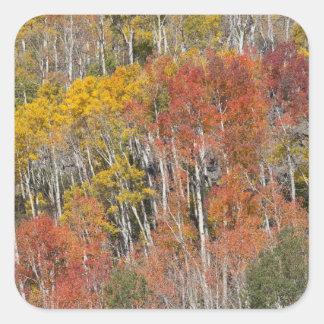 Provo River and aspen trees 15 Sticker