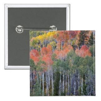 Provo River and aspen trees 16 Button