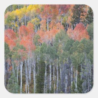 Provo River and aspen trees 16 Sticker