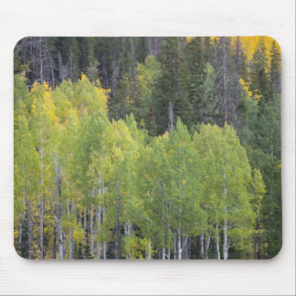 Provo River and aspen trees 2 Mouse Pad