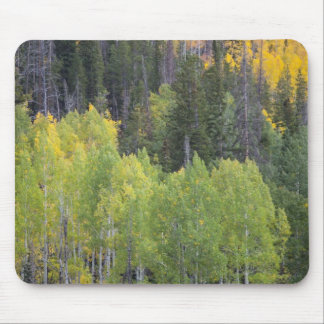 Provo River and aspen trees 2 Mousepads
