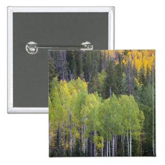 Provo River and aspen trees 2 Pinback Button