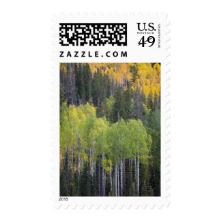 Provo River and aspen trees 2 Postage