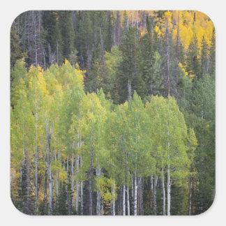 Provo River and aspen trees 2 Square Stickers