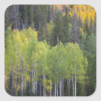 Provo River and aspen trees 2 Stickers
