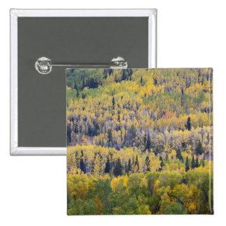 Provo River and aspen trees 3 Pinback Button