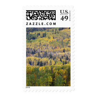 Provo River and aspen trees 3 Postage