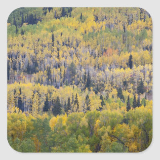 Provo River and aspen trees 3 Stickers