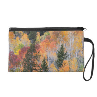 Provo River and aspen trees 4 Wristlet Clutch