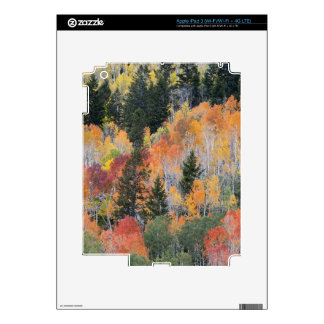 Provo River and aspen trees 4 Decal For iPad 3