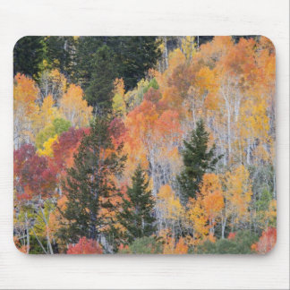 Provo River and aspen trees 4 Mouse Pad