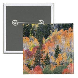 Provo River and aspen trees 4 Pinback Button