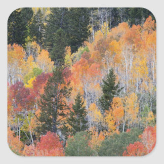Provo River and aspen trees 4 Stickers