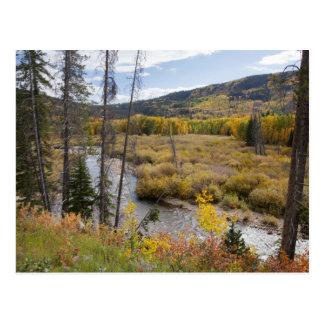 Provo River and aspen trees 5 Postcard
