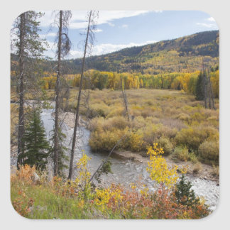 Provo River and aspen trees 5 Square Stickers