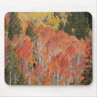 Provo River and aspen trees 6 Mouse Pads