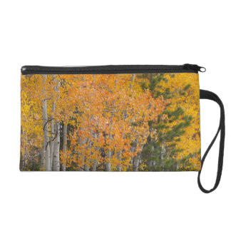 Provo River and aspen trees 7 Wristlet Clutch