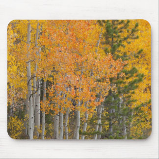Provo River and aspen trees 7 Mouse Pad