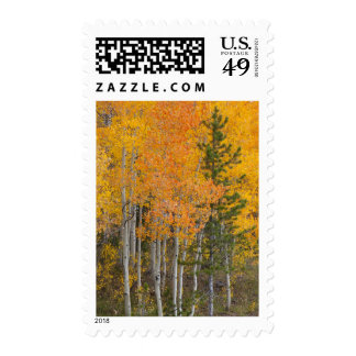 Provo River and aspen trees 7 Postage