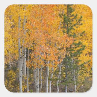 Provo River and aspen trees 7 Sticker