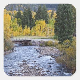 Provo River and aspen trees 8 Sticker