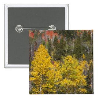 Provo River and aspen trees 9 Button