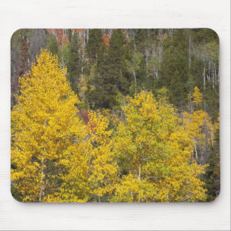 Provo River and aspen trees 9 Mousepads