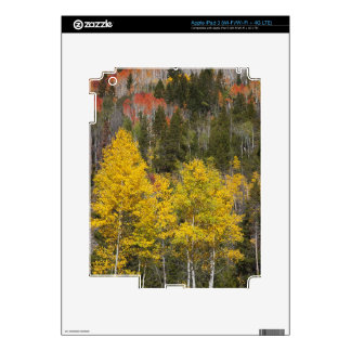 Provo River and aspen trees 9 Skin For iPad 3