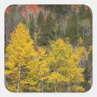 Provo River and aspen trees 9 Sticker