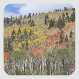 Provo River and aspen trees Square Stickers