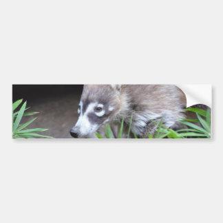 Prowling Coati Bumper Sticker