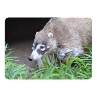 Prowling Coati Card