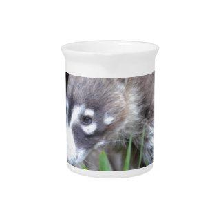 Prowling Coati Drink Pitcher