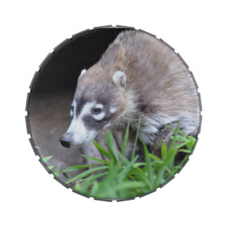 Prowling Coati Jelly Belly Tin