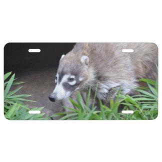 Prowling Coati License Plate