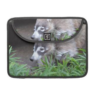 Prowling Coati MacBook Pro Sleeves