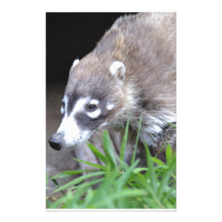 Prowling Coati Stationery