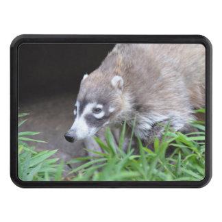 Prowling Coati Trailer Hitch Cover