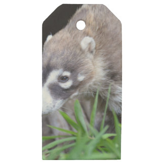 Prowling Coati Wooden Gift Tags