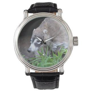 Prowling Coati Wrist Watch