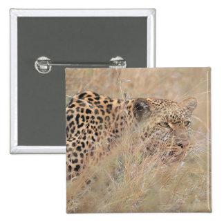 Prowling Leopard Hiding in Grassland Button