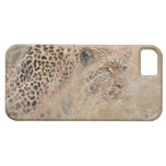 Prowling Leopard Hiding in Grassland iPhone 5 Covers